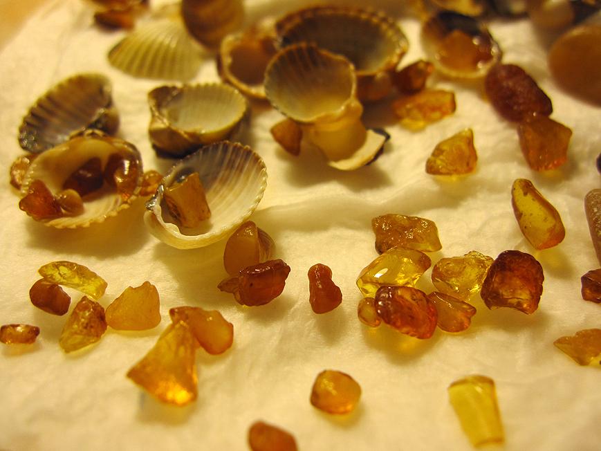Bursztyny z Sopockiej plaży. Ambers from the Sopot Beach. Foto 3.
