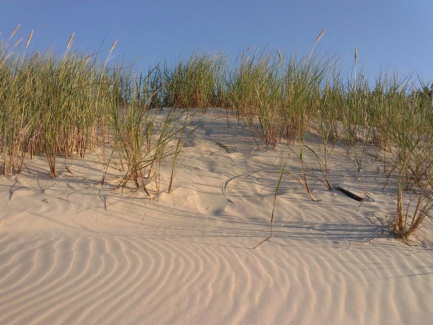 Dźwirzyno county, The Baltic Sea, Poland in July 2014 - Dunes. Photo: Anna Maria Karolak.