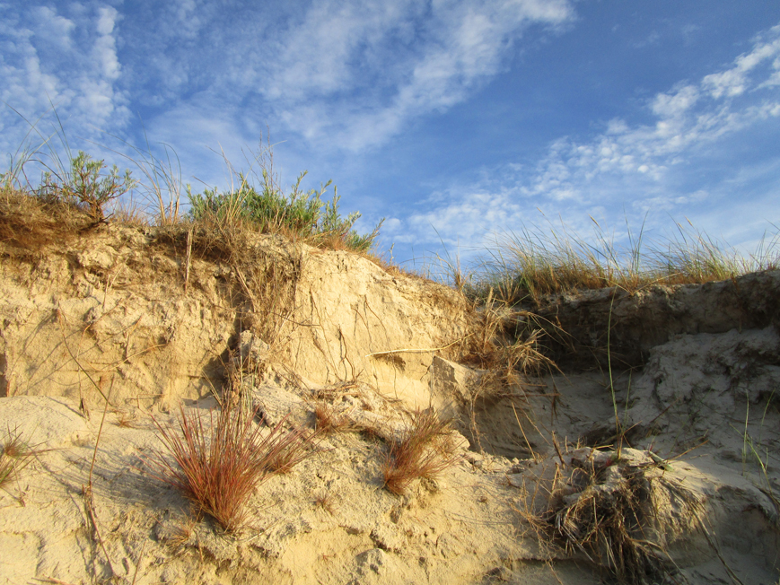 Dunes, the Baltic Sea, Poland - in June 2015.