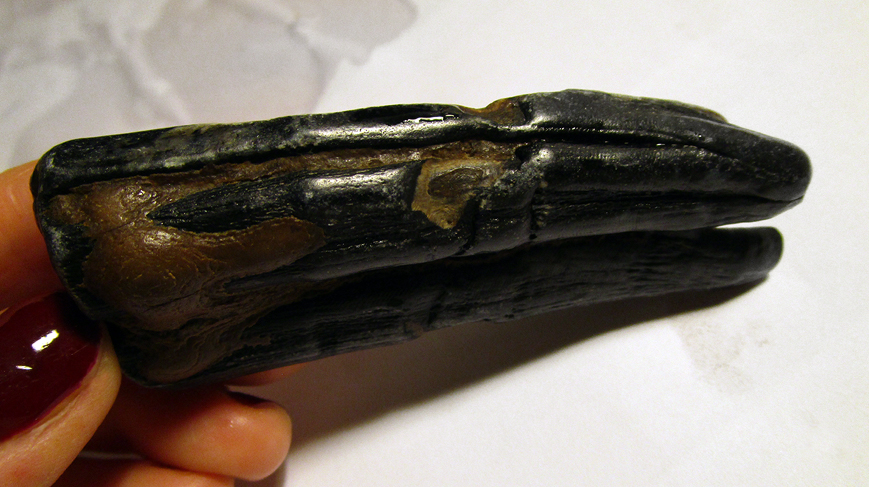 fossil_from_the_baltic_sea_2015_anna_maria_karolak_photo_161_02
